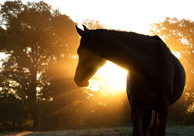 horses-weird-relatives.jpg.638x0_q80_crop-smart