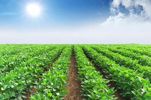 7 secretos de las plantas solanáceas-MainPhoto