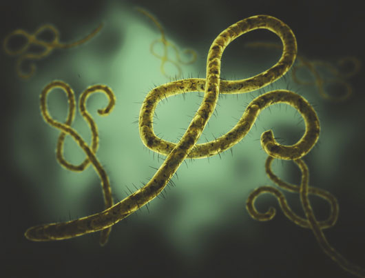 Health-First-10-Facts-you-Need-to-Know-About-the-Ebola-Virus-photo6