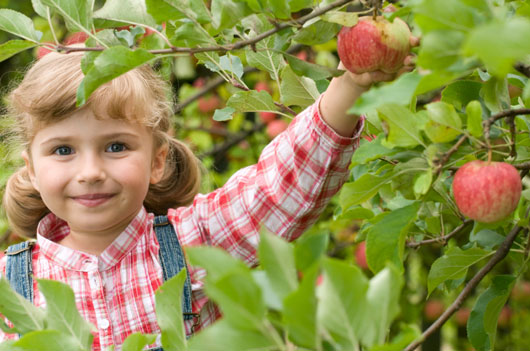From-Golden-Delicious-to-Gala--15-Lessons-Your-Kid-Can-Learn-Just-from-Apple-photo2