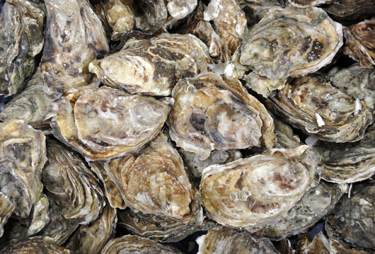Oh-Shuck-You-15-Things-to-Know-About-Eating-OystersDKTR-photo11