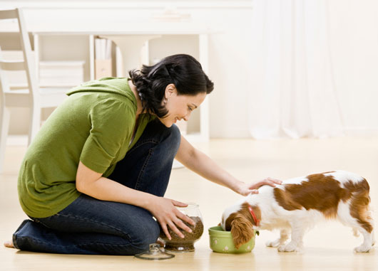 Paws-to-Think-15-Reasons-why-its-Time-for-Your-Family-to-Get-a-Dog-photo3