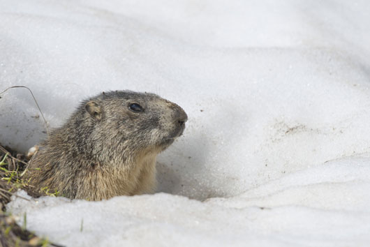 Groundhog-Day-Why-Does-it-Matter-Again--MainPhoto