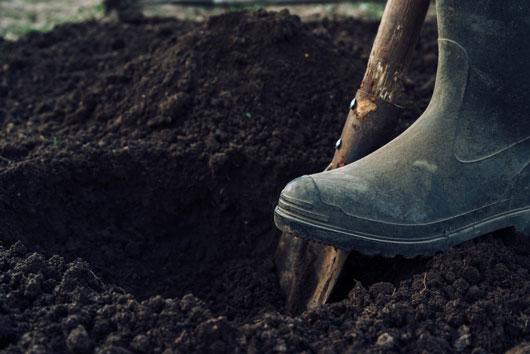 10-cosas-claves-que-debes-saber-sobre-plantar-un-árbol-frutal-photo4