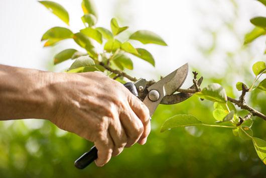 10-cosas-claves-que-debes-saber-sobre-plantar-un-árbol-frutal-photo6