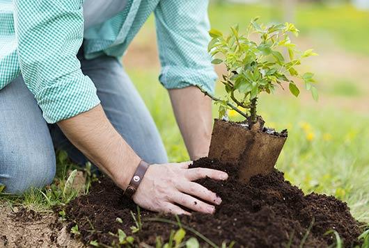 10 cosas claves que debes saber sobre plantar un rbol - Arboles y plantas de jardin ...