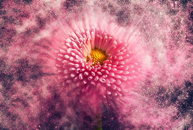 Poder floral: Cómo adornar tu hogar con arreglos florales frescos-MainPhoto