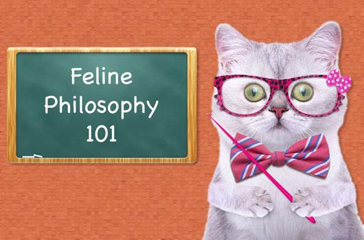 Filosofía-felina-8-datos-gatunos-y-lecciones-que-sólo-puedes-aprender-de-un-gatito-MainPhoto