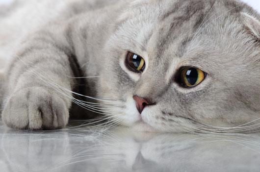 Filosofía-felina-8-datos-gatunos-y-lecciones-que-sólo-puedes-aprender-de-un-gatito-Photo02