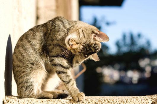 Filosofía-felina-8-datos-gatunos-y-lecciones-que-sólo-puedes-aprender-de-un-gatito-Photo3