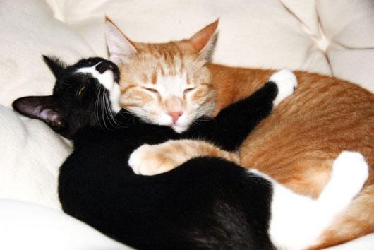 Filosofía-felina-8-datos-gatunos-y-lecciones-que-sólo-puedes-aprender-de-un-gatito-Photo7