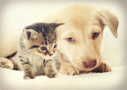 El-significado-de-los-sueños-Sueños-con-animales-explicados-Photo2