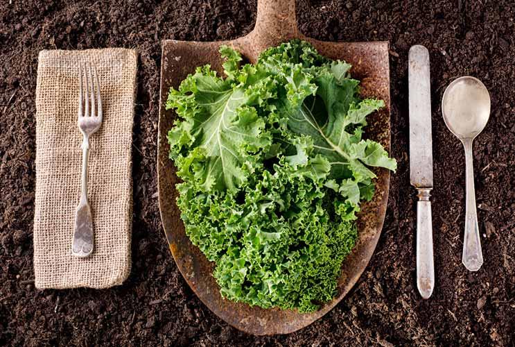 La verdad sobre el exceso de alimentación con la col rizada-Nutrition-MainPhoto