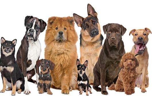 Exploración canina Cómo elegir al perro adecuado para tu familia-Photo2