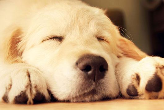 Exploración-canina-Cómo-elegir-al-perro-adecuado-para-tu-familia-Photo2
