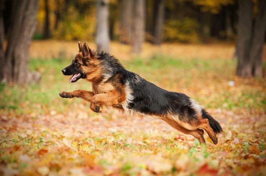 Exploración-canina-Cómo-elegir-al-perro-adecuado-para-tu-familia-Photo3