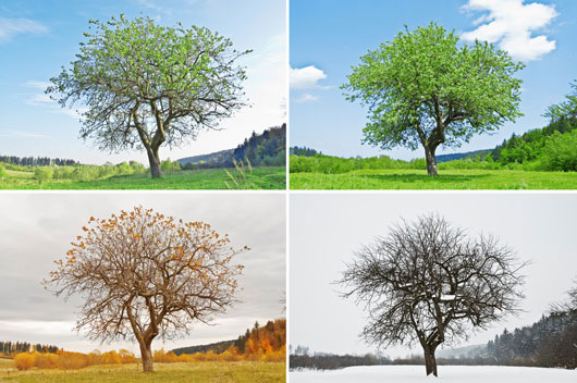 10-lecciones-de-vida-importantes-que-puedes-aprender-del-cambio-de-hojas-de-otoño-Photo2
