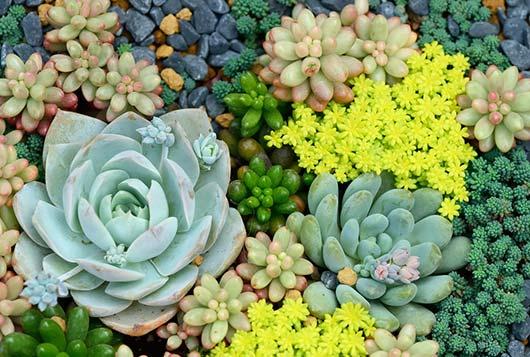 Cómo cuidar y crecer plantas suculentas-MainPhoto