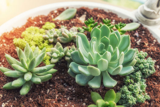 Cómo-cuidar-y-crecer-plantas-suculentas-Photo2