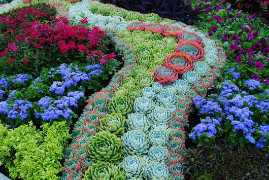 C mo cuidar y crecer plantas suculentas mamiverse - Como cuidar hortensias en maceta ...