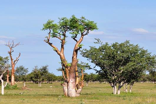 8 razones por las que todo mundo está hablando del árbol moringa-MainPhoto