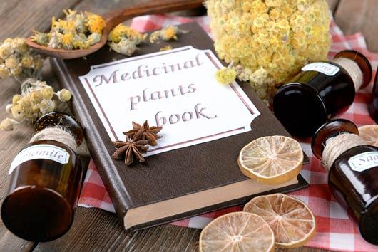 Raíces para la vida El poder de las platas y hierbas medicinales-MainPhoto