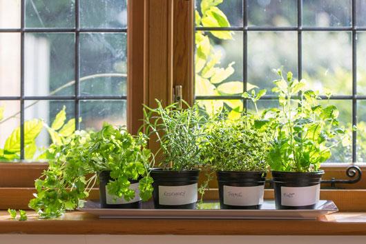 Cómo-cultivar-un-jardín-interior-de-hierbas-que-en-verdad-usarás-Photo3