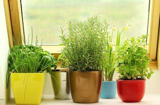 Cómo cultivar un jardín interior de hierbas que de verdad usarás-MainPhoto