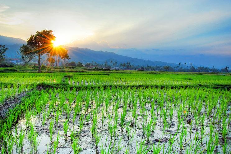 Tipos de arroz Rojo, negro, moreno, blanco, cuál es la diferencia-MainPhoto