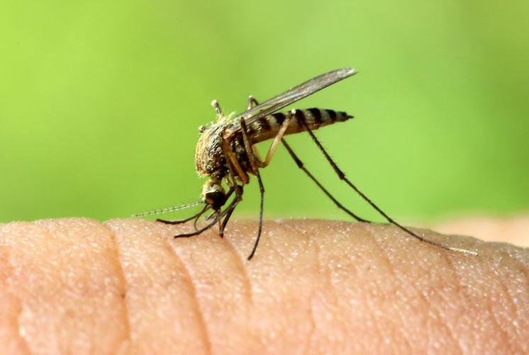 10 tipos de mosquitos que quieres evitar-MainPhoto
