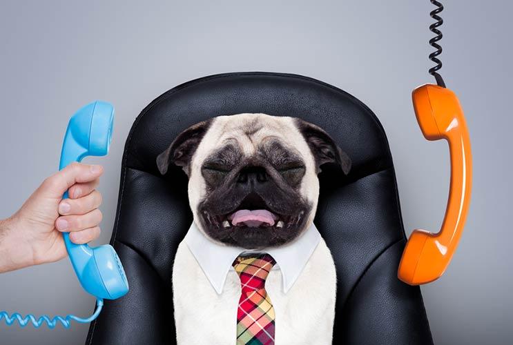 13 razones para llevar a tu perro al trabajo-MainPhoto