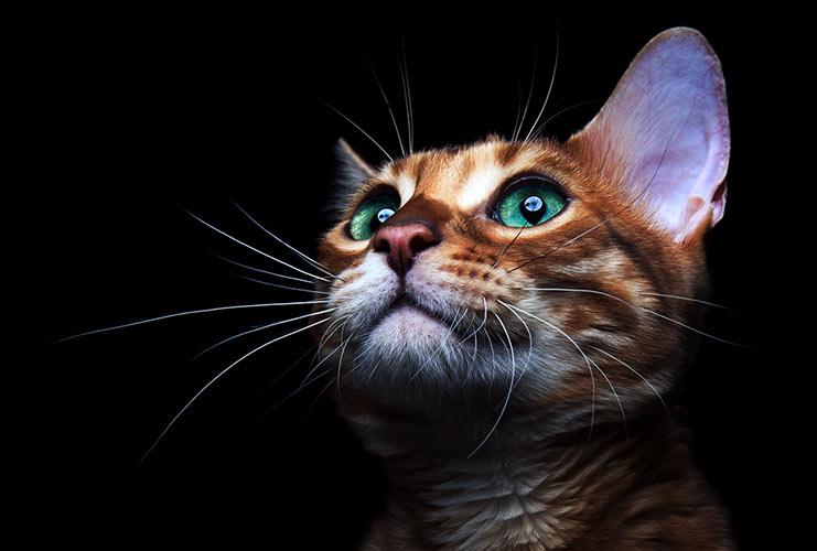 Fotografía de Mascotas 101 Toma los portaretratos de tu mascota como toda una profesional-MainPhoto