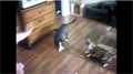 Cat Disciplines Rambunctious Dog