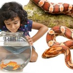 The-Best-Small-Pet-for-Your-Kids-MainPhoto