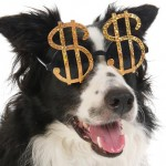 The-Financial-Cost-of-Owning-a-Dog-MainPhoto