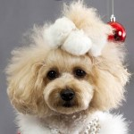5-Gifts-for-the-Pet-Lover-in-Your-Life-MainPhoto