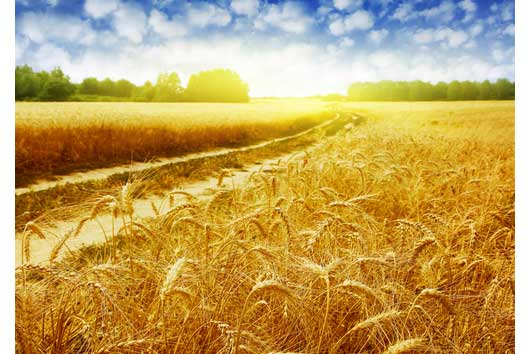 Beccaglia-Flaws of a Wheat Dominated Diet-Photo1