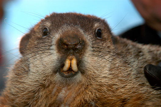 Groundhog-Day-A-Fun-Tradition-with-Ancient-Roots