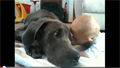 Puppy Love: Great Dane Cuddles With Baby