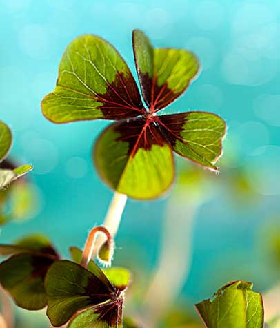 Fun & Green Family Crafts & Activities for Saint Patrick's Day