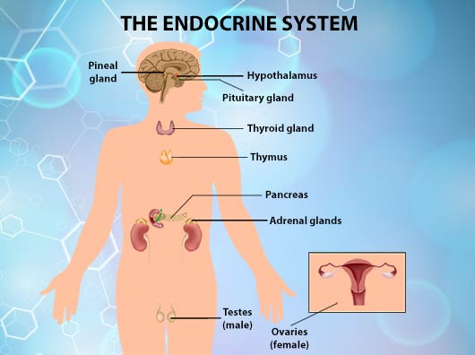 Endocrine Disrupting Chemicals A Threat In Every Home Mamiverse