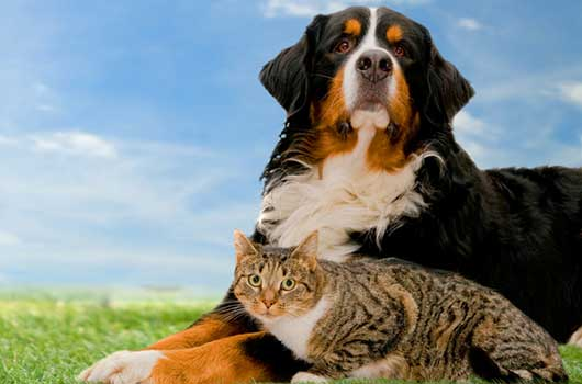 5 Ways to Help Protect Your Pet-MainPhoto
