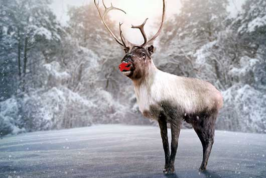 5 Life Lessons from Rudolph the Red-Nosed Reindeer-MainPhoto