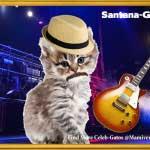 Carlos Santana-Gato Black Magic Kitty!-SliderPhoto