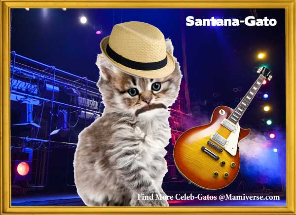 Carlos Santana-Gato Black Magic Kitty!-SliderPhoto