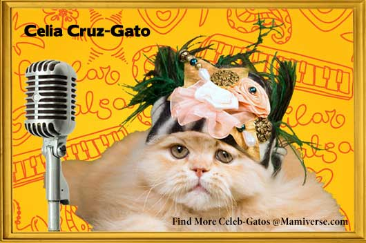 Celia Cruz-Gato Empowers Individuality!-MainPhoto