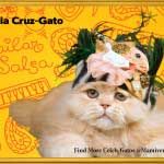 Celia Cruz-Gato Empowers Individuality!-SliderPhoto