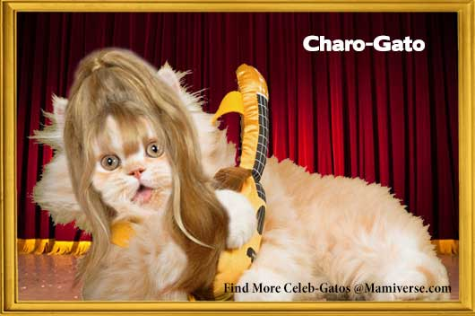 Charo-Gato Celebrates Herself!-MainPhoto