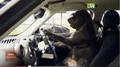 Doggie Driver's ED