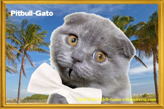 Pitbull-Gato I Know You Want Me Dale!-MainPhoto
